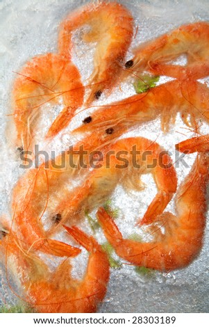 shrimp in the ice - stock photo
