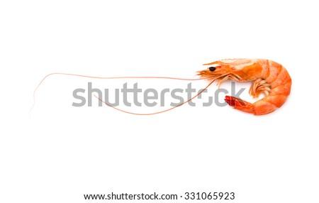 shrimp on a white background - stock photo