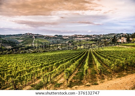 Shrubs grapes before harvest. Chianti, Tuscany, Italy - stock photo