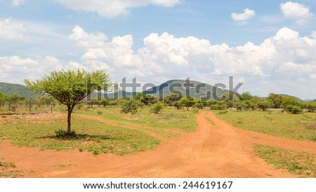 Shrubs which are the typical vegetation common in the dry savannah grasslands of Botswana - stock photo