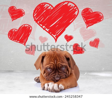 shy love of a dog de bordeaux puppy wit adorable face on hearts background - stock photo
