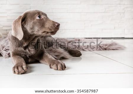 shy puppy - stock photo