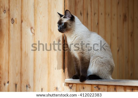 Siamese cat sitting on the railing of a wooden house. - stock photo