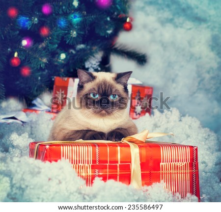 Siamese cat  with present against Christmas tree - stock photo
