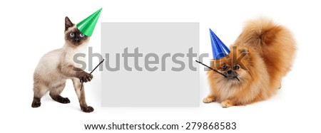 Siamese kitten and Pomeranian dog holding up a blank white sign - stock photo
