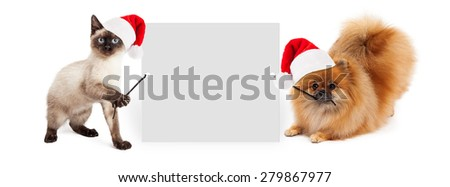 Siamese kitten and Pomeranian dog holding up a blank white sign while wearing red Christmas Santa Claus hats - stock photo