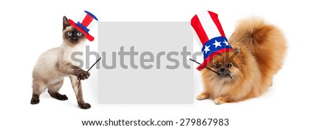 Siamese kitten and Pomeranian dog holding up a blank white sign while wearing red, white and blue American Independence Day hats - stock photo