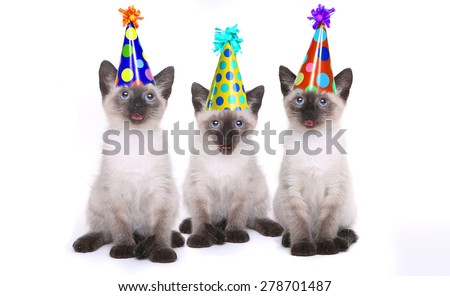 Siamese Kittens Having a Birthday Celebration - stock photo