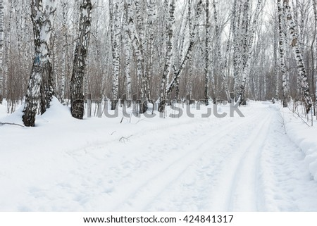Siberia. Ski trail and birch forest in winter. - stock photo