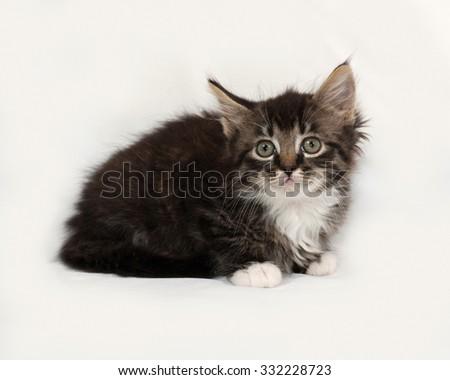 Siberian fluffy tabby kitten lies on gray background - stock photo