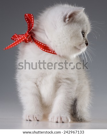 Siberian grey cat with red ribbon - stock photo