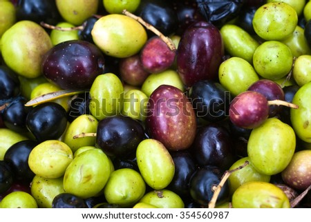 sicilian olives background. olives picking. selective focus with shallow depht of field - stock photo