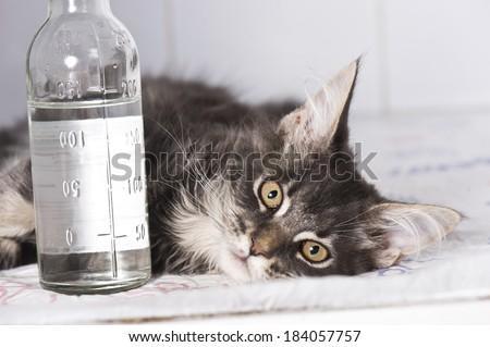 Sick cat - stock photo