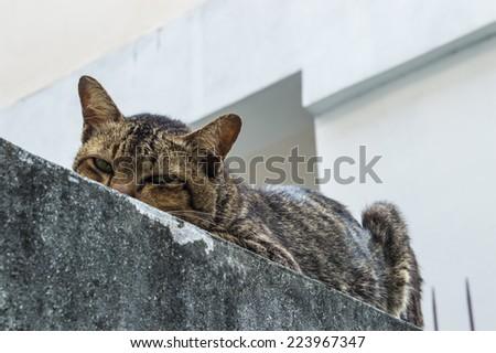 Sick cat sleep - stock photo
