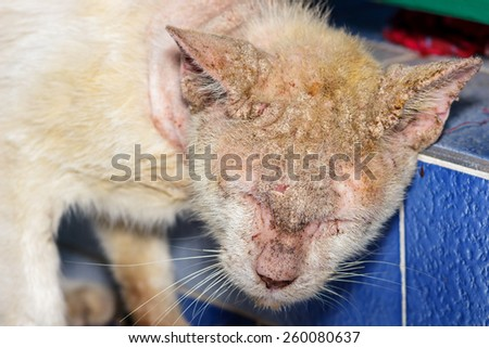 Sick cat with skin disease, close up. - stock photo