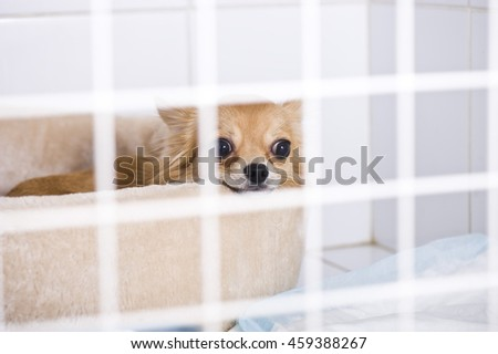 Sick dog in animal hospital - stock photo