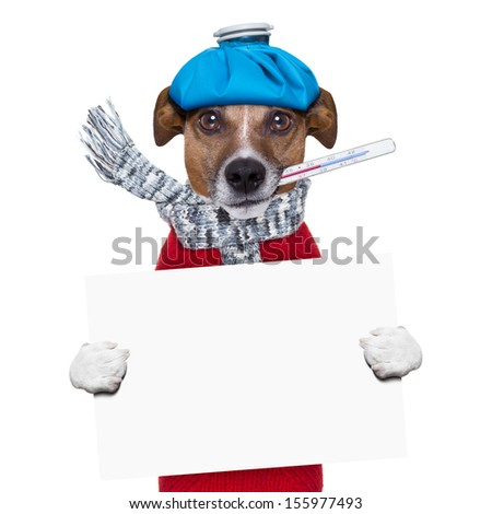 sick dog with fever holding a  blank banner - stock photo