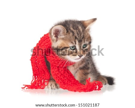 Sick kitten with a scarf tied round a neck isolated on white background - stock photo