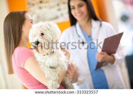 Sick Maltese dog on exam in vet clinic - stock photo