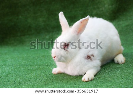 Sick white adult rabbit on faux green grass - stock photo