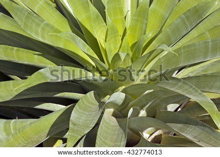 Side view close up of patterns and textures of succulent green plant leaves - stock photo