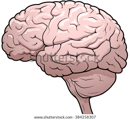 Side view drawing of a human brain - stock photo