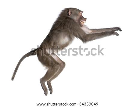 how to turn over cruse of monkey island