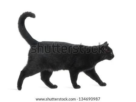Side view of a Black Cat walking, isolated on white - stock photo