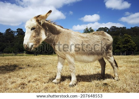 Side view of a donkey walking in field against trees and clouds - stock photo