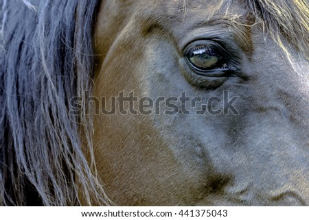 Side view of a horse's face with close up of the eye - stock photo