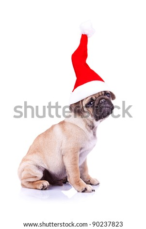 side view of a  little pug puppy wearing a santa hat, sitting on white background - stock photo