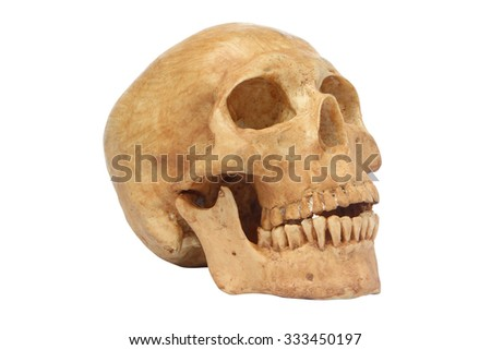 Side view of human skull model isolated include path - stock photo