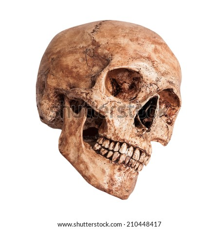 Side view of human skull o on isolated white background - stock photo