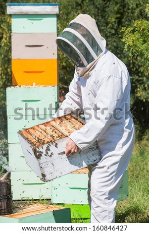 Side view of male beekeeper in protective workwear carrying honeycomb frames in crate at apiary - stock photo