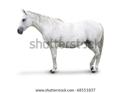 Side view of White Horse Isolated with clipping path - stock photo