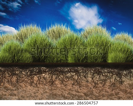 side view plant growing in nature conservation concept - stock photo