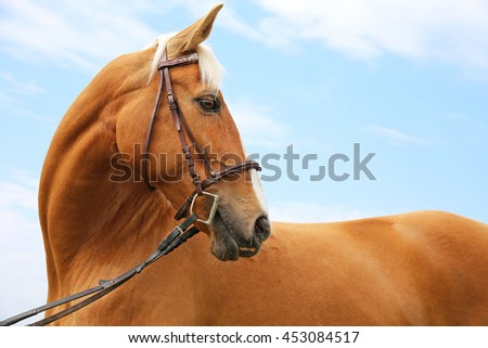 Side view portrait of a reddish-brown colored beautiful purebred stallion - stock photo