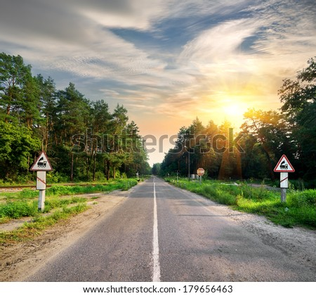 Signs on the road in the forest  - stock photo