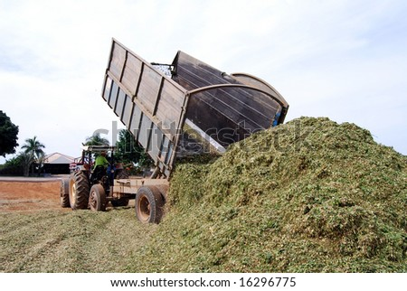 Silage emptied on the ground, used later as organic fodder at a huge cattle ranch in Brazil - stock photo