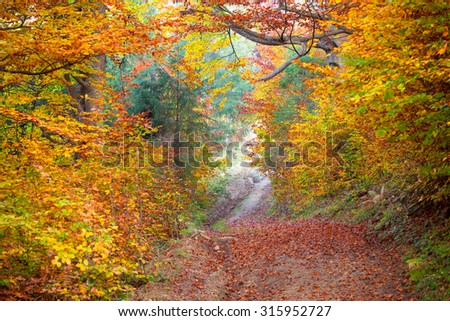 Silent Autumn forest - colorful vibrant leaves and trees, horizontal fall background - stock photo