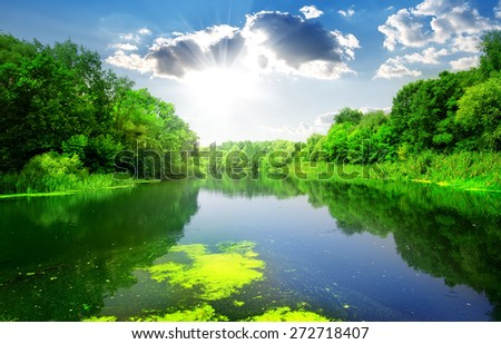 Silent river through the green forest in summer - stock photo