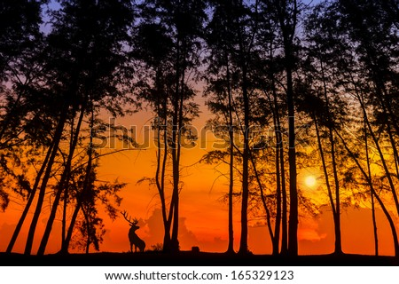 silhouette deer and tree via great sunset - stock photo