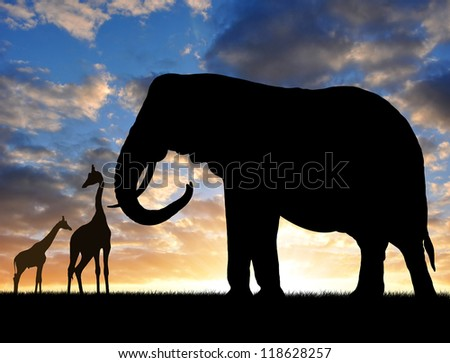 Silhouette elephant with giraffes in the sunset - stock photo