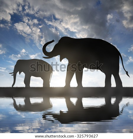 Silhouette elephants in the sunset - stock photo