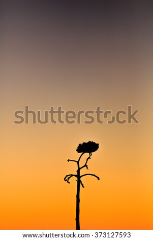 silhouette flowers at sunset times - stock photo