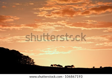 Silhouette landscape with beautiful natural sunset sky - stock photo