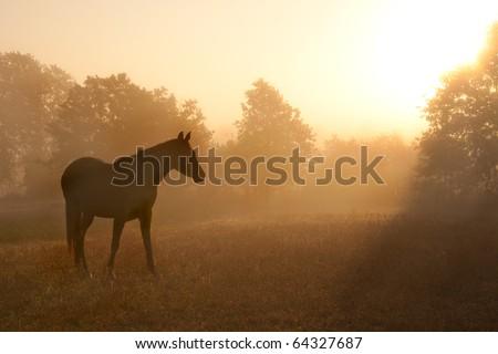 Silhouette of a beautiful Arabian horse against sunrise in heavy fog, in rich sepia tone - stock photo