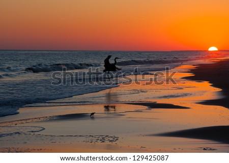 Silhouette of a bird landing on the beach - stock photo
