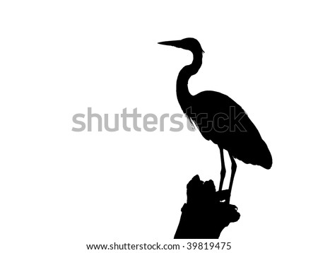 Silhouette of a Blue Heron isolated  on white - stock photo