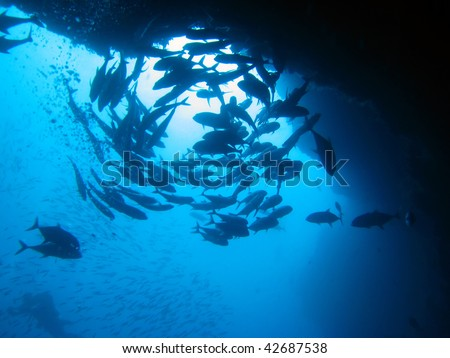 Silhouette of a circling school of fishes - stock photo